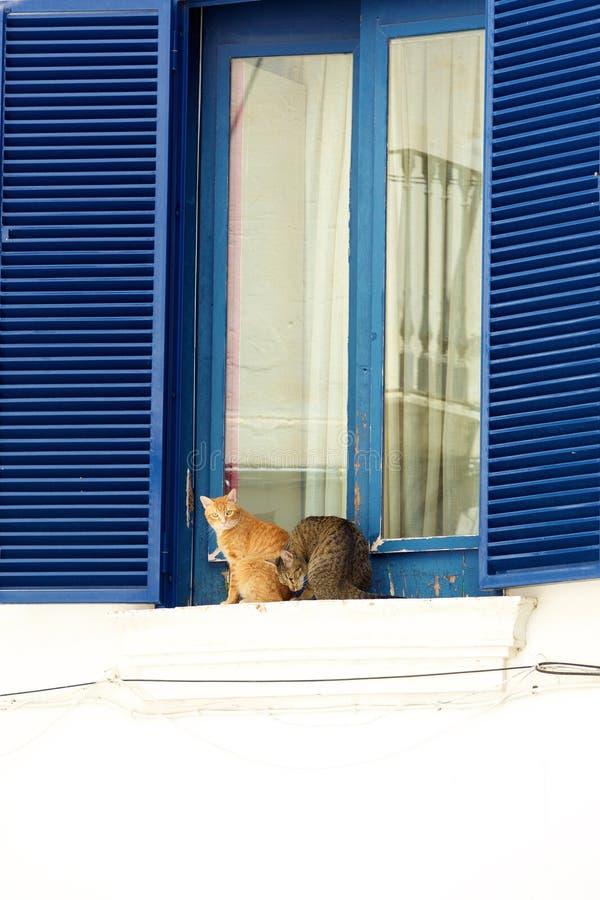 Twee luie katten die op vensterbank zitten stock afbeeldingen