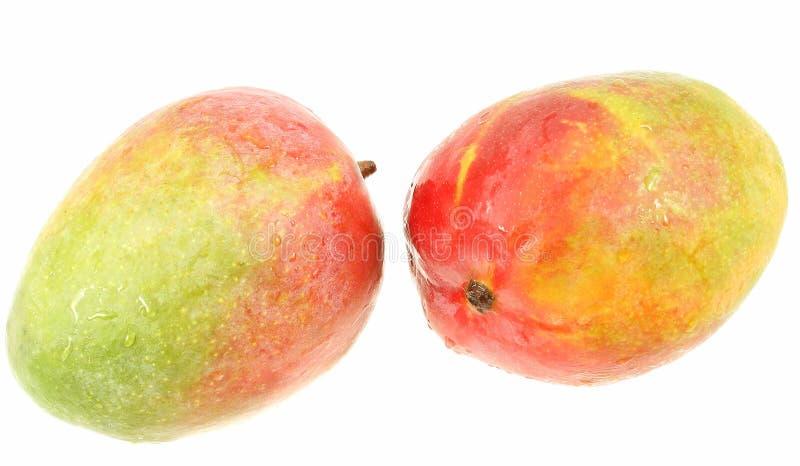 Twee mango's op wit stock afbeelding