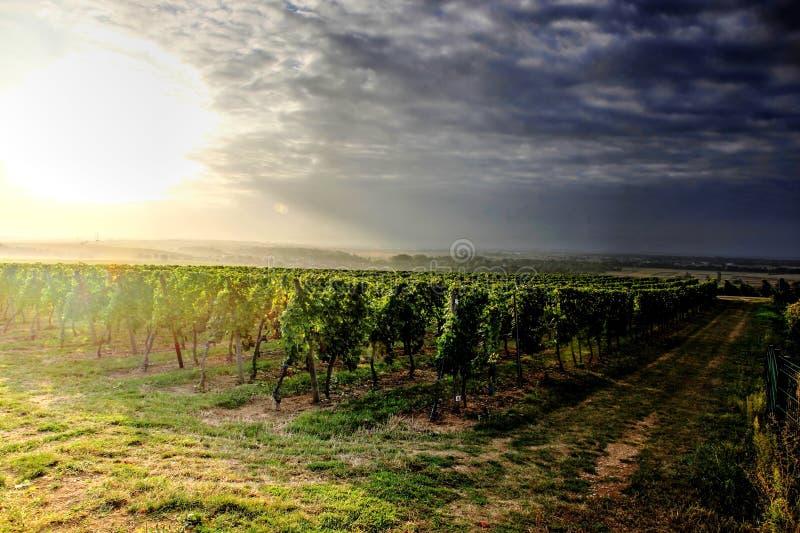 Twee manieren die in de wijngaarden kruisen royalty-vrije stock afbeelding