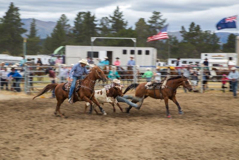 Twee mannelijke cowboyruiters op paarden vangen als groep een kalf D royalty-vrije stock fotografie