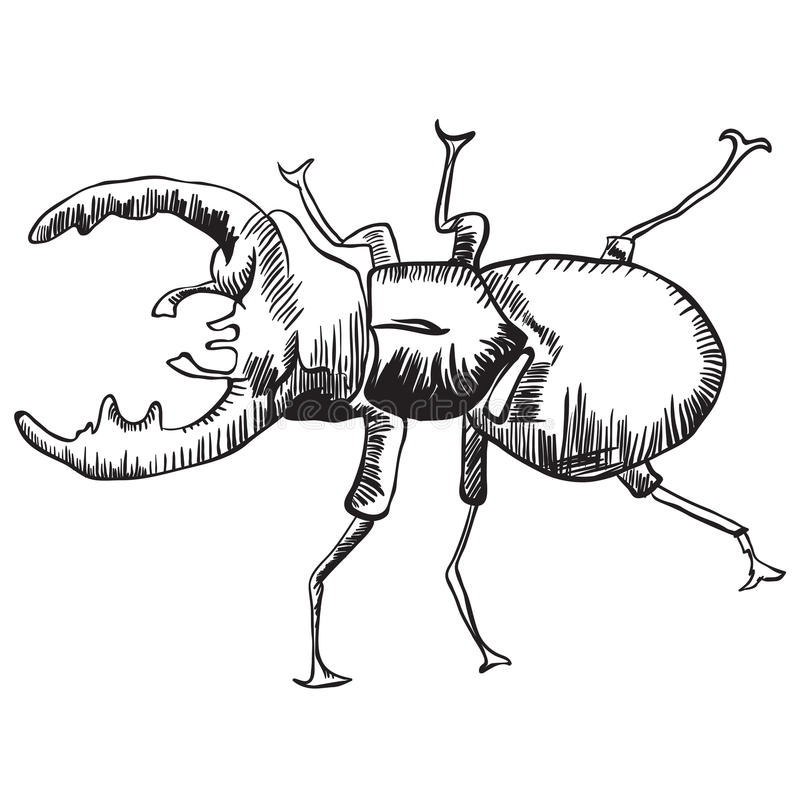 Twee mannetjeskevers stock illustratie