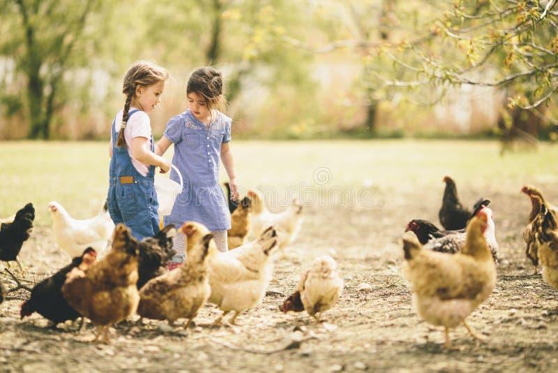 Twee meisje voedende kippen stock afbeelding