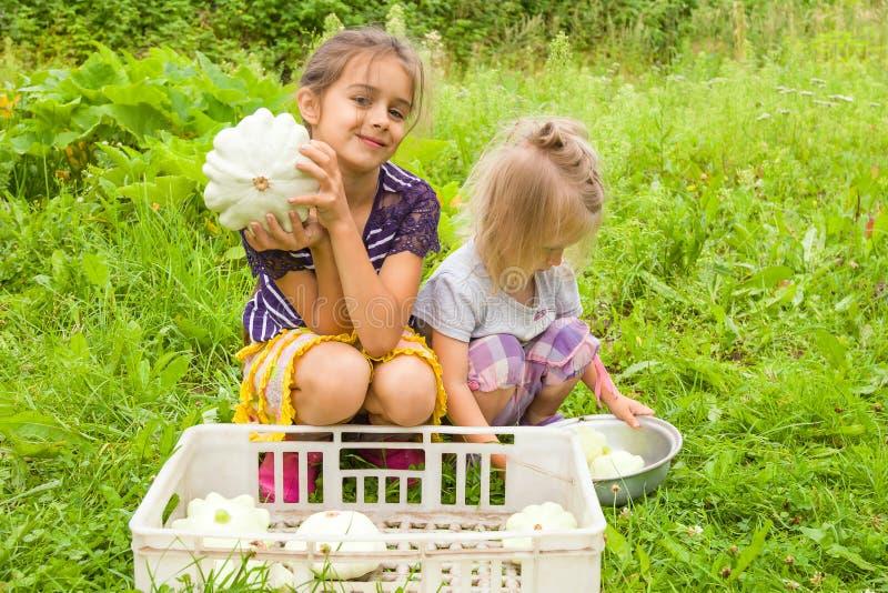 Twee meisjezusters die verse pompoenen in hun handen houden dichtbij een kom met het oogsten van pompoenen en het glimlachen stock fotografie