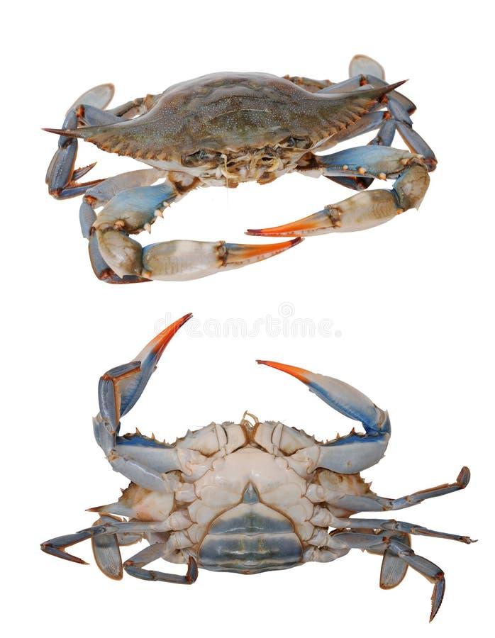 Twee meningen van krabben royalty-vrije stock foto