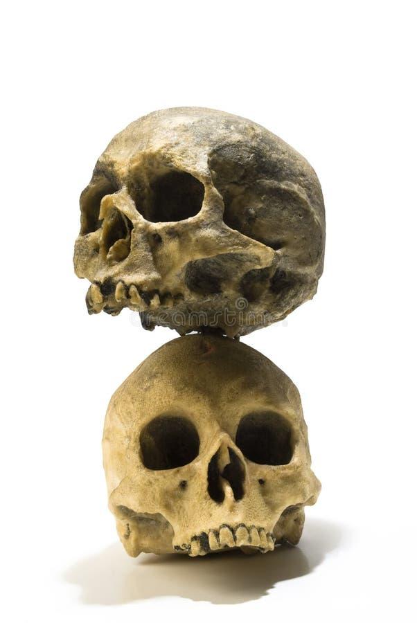 Twee menselijke schedelstapel stock fotografie