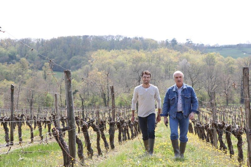 Twee mensen die door wijngaard lopen royalty-vrije stock foto's