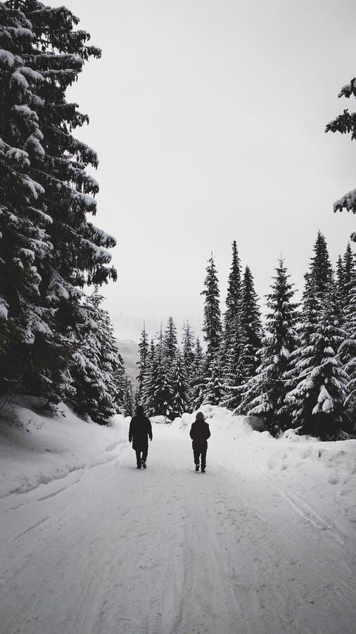 Twee mensen die op bergweg in sneeuwbos bij de winter lopen royalty-vrije stock foto