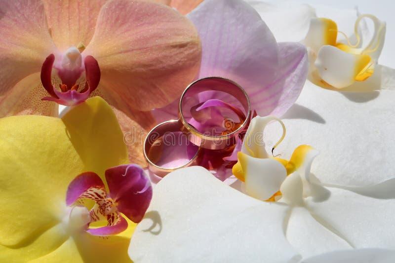 Twee mooie ringen op orchideeën stock foto's