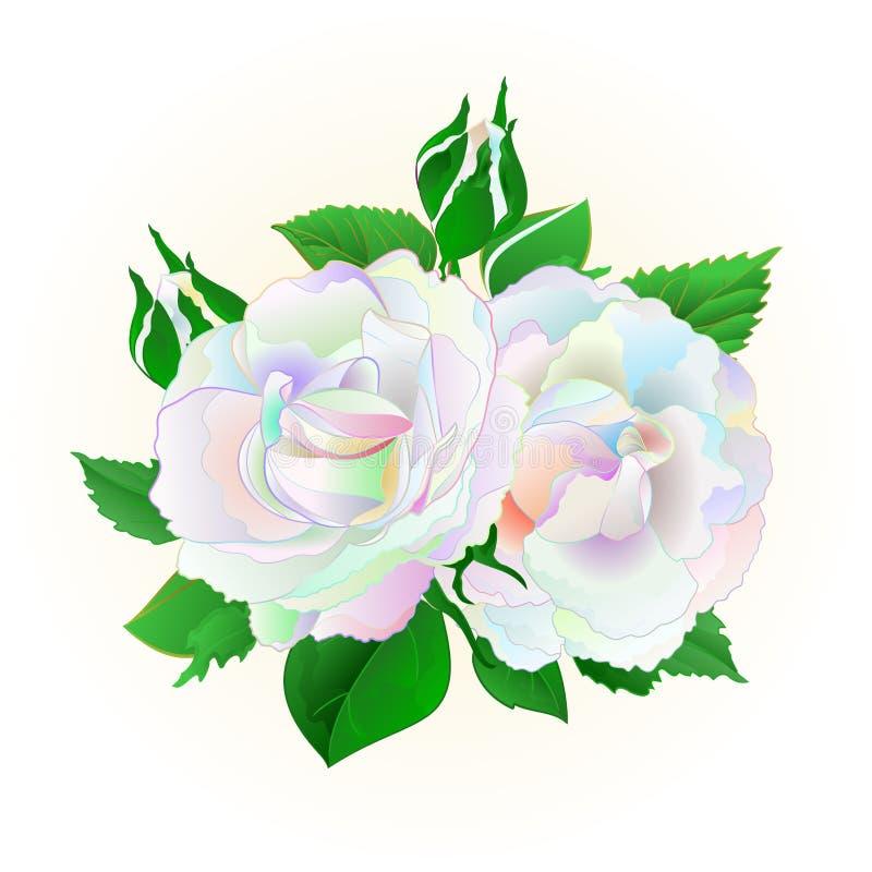 Twee multicolored rozen op een witte uitstekende vector botanische editable illustratie als achtergrond royalty-vrije illustratie
