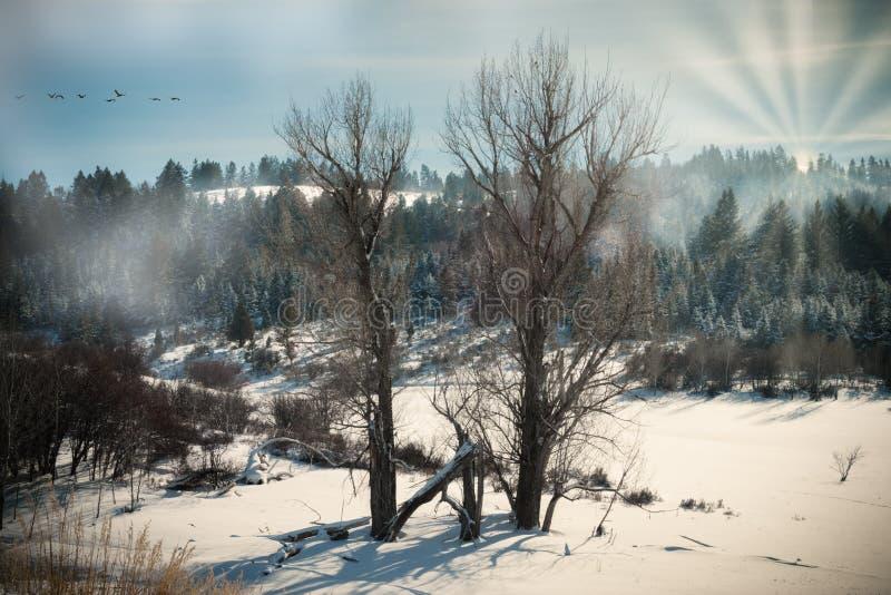 Twee Naakte Bomen bij de Rand van het Bos stock afbeelding