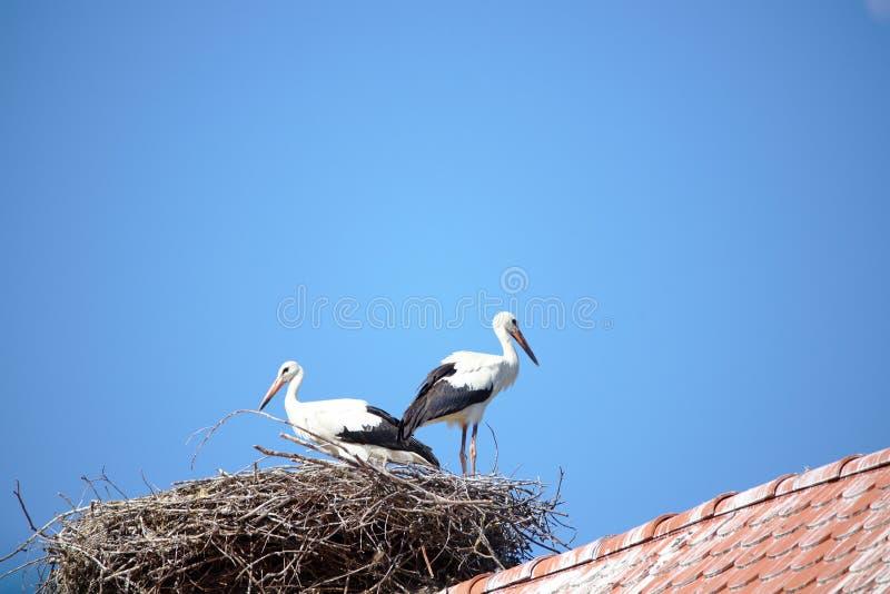 Twee ooievaars op dak en nest stock foto