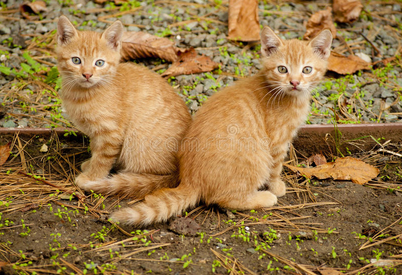 Download Twee oranje katjes stock foto. Afbeelding bestaande uit bladeren - 29506602