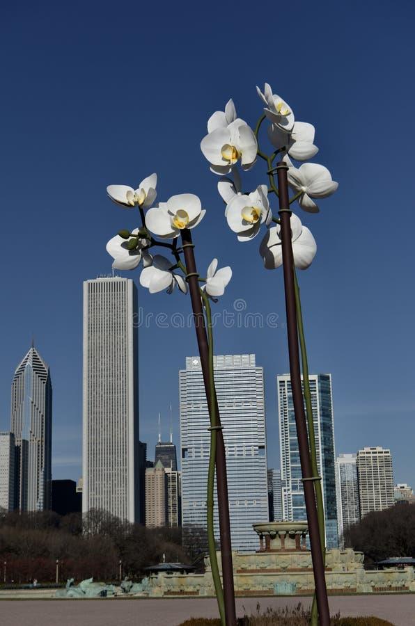 Twee Orchideeën royalty-vrije stock afbeeldingen