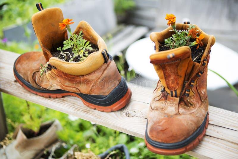 Twee oude laarzen met oranje geplante bloemen royalty-vrije stock afbeelding