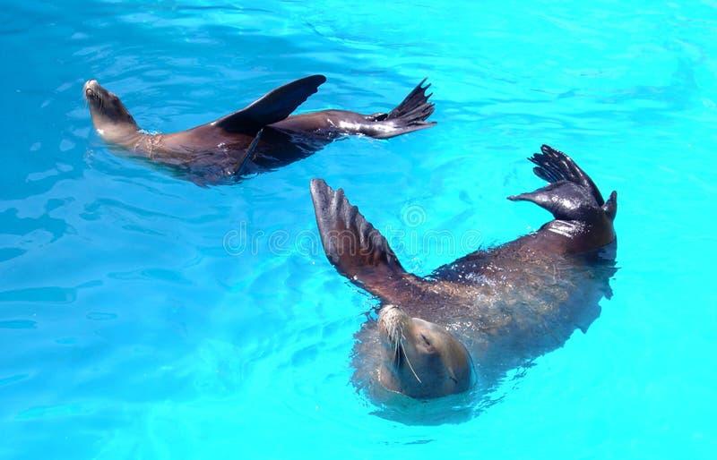 Twee Overzeese Dieren stock afbeelding