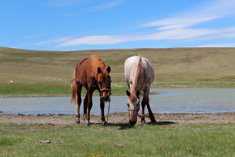 Twee paarden dichtbij het meer royalty-vrije stock foto's