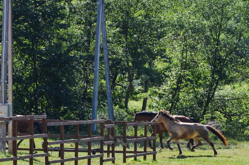 Twee paarden die in landbouwbedrijf lopen stock fotografie
