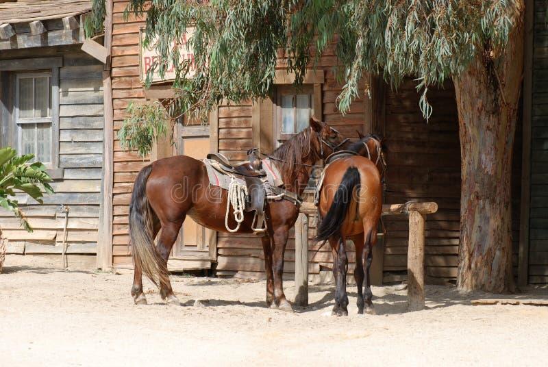 Twee Paarden in een oude Amerikaanse stad royalty-vrije stock foto