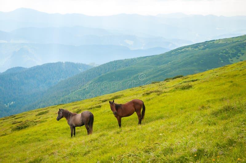 Twee paarden is geweid tegen bergen in de zomer stock afbeeldingen
