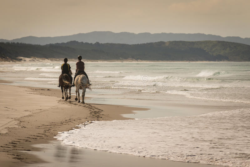 Twee paarden met ruiters op zandig strand stock afbeeldingen