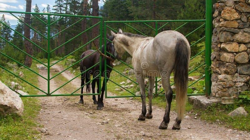 Twee paarden ontmoeten elkaar stock fotografie
