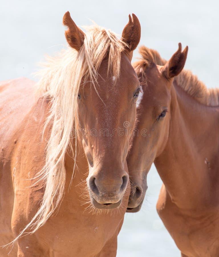 Twee paarden op de aard royalty-vrije stock foto's