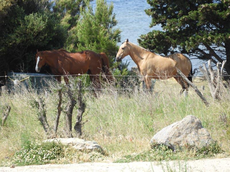 Twee paarden op een weide stock afbeelding