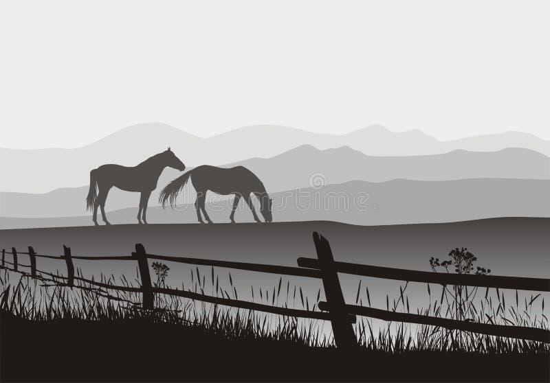 Twee paarden op weide met omheining vector illustratie