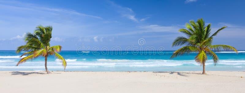 Twee palmen op het tropische strand royalty-vrije stock fotografie