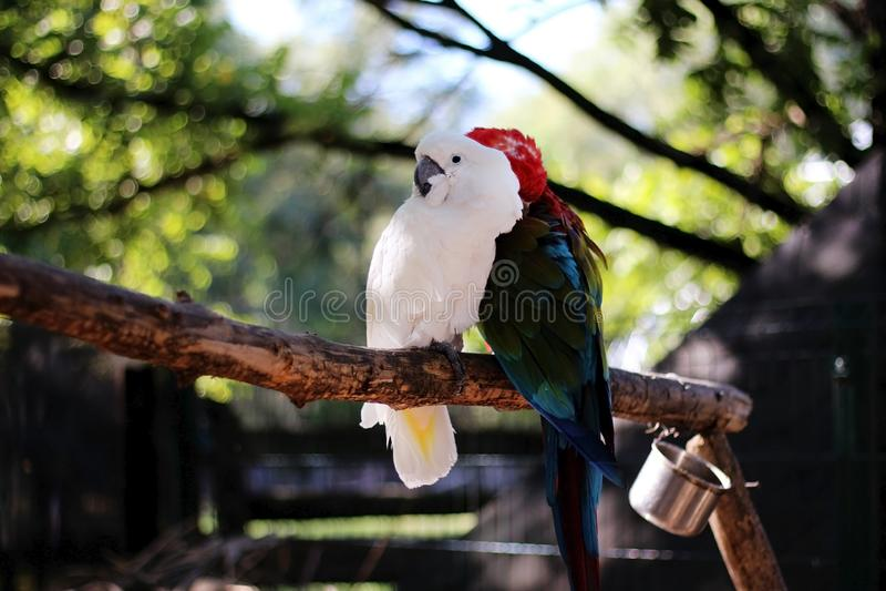 Twee papegaaien zitten op een tak in de dierentuin stock foto