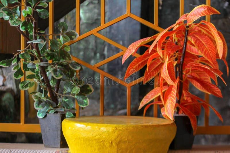 Twee paren bloemen tegen de gele omheining stock afbeeldingen