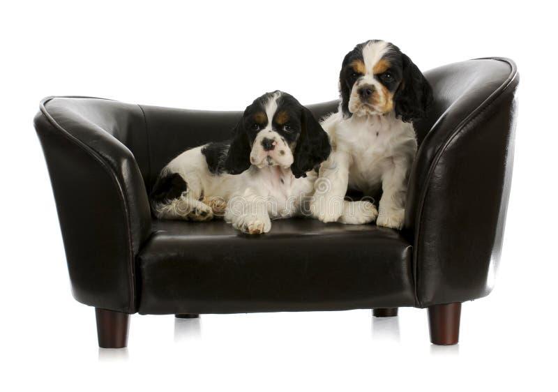 Twee puppy royalty-vrije stock afbeelding