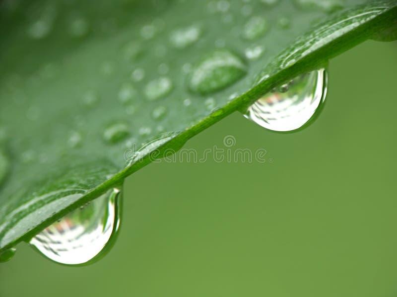 Twee regendruppels stock afbeeldingen