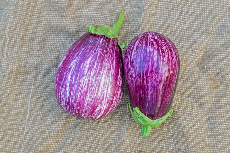Twee rijpe aubergines op een het ontslaan achtergrond stock foto's