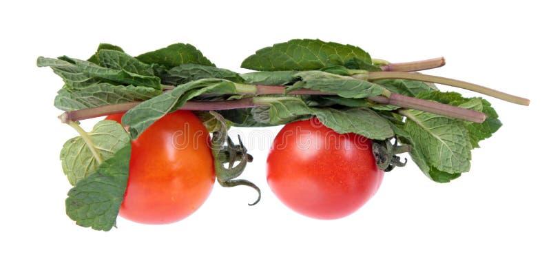 Twee rode tomaten en munt vertakken zich met verse groene die bladeren op witte achtergrond worden geïsoleerd royalty-vrije stock afbeeldingen