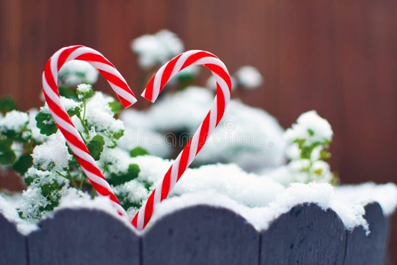 Twee rood en wit gestreept suikergoedriet die de vorm van een hart voor sneeuw vormen behandelde installaties royalty-vrije stock foto's