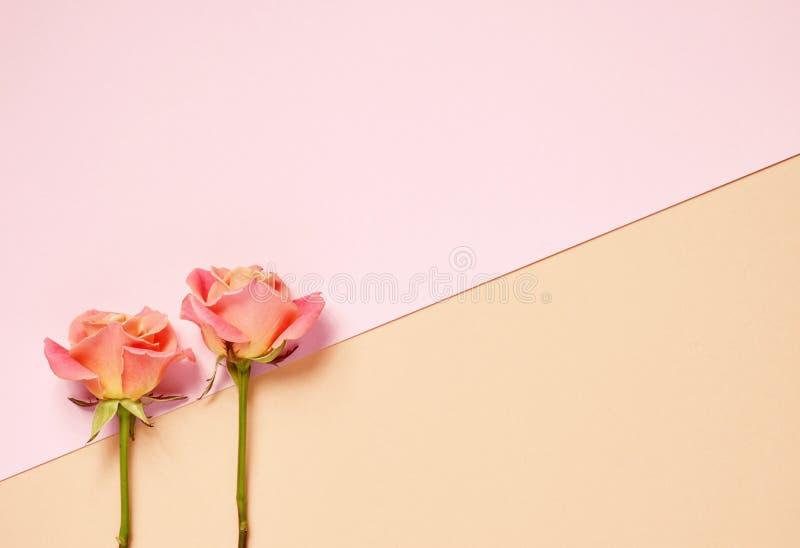 Twee roze rozen royalty-vrije stock fotografie