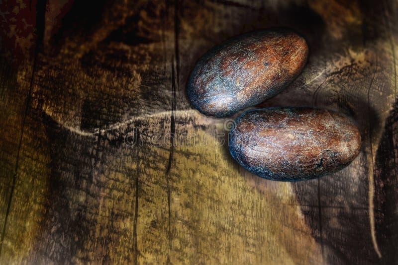 Twee ruwe de cacaobonen van Criollo op een oude houten achtergrond stock afbeeldingen
