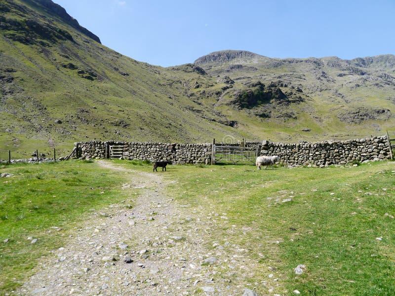 Twee schapen voor sheepfold met erachter bergen royalty-vrije stock fotografie
