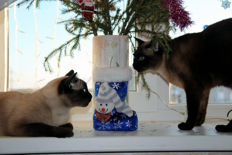 Twee siamese katten onder de Kerstboom stock foto