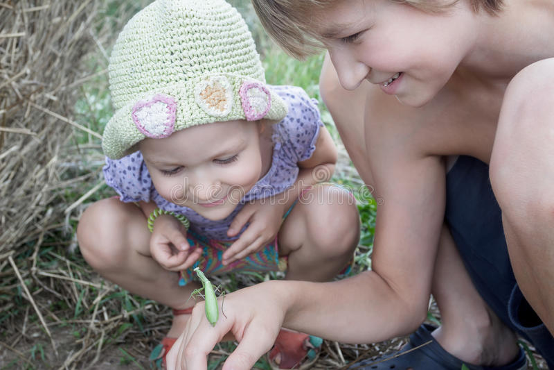 Twee siblings die groene bidsprinkhanen op de zomergebied bestuderen stock afbeelding