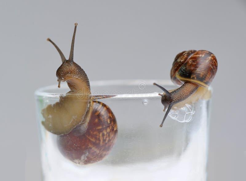 Twee slakken op glas stock afbeeldingen