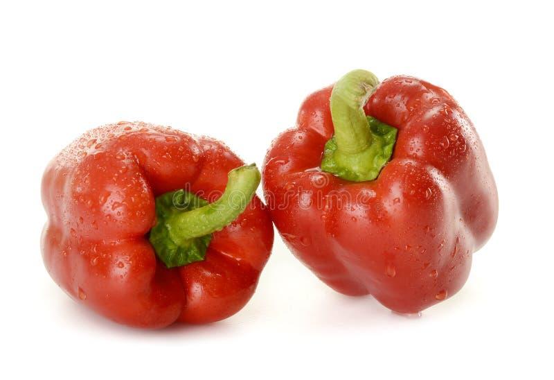 Twee Spaanse pepers die op wit worden geïsoleerdu stock foto's
