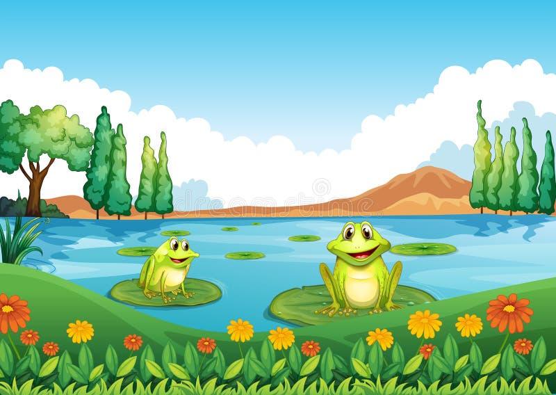 Twee speelse kikkers bij de vijver stock illustratie