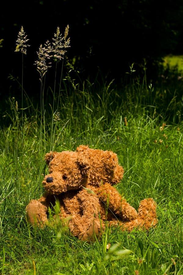 Twee teddybears in het gras stock afbeelding