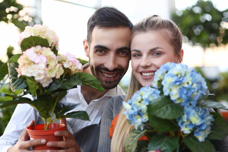 Twee Tuinlieden die het Portret van de Hydrangea hortensiabloem tonen royalty-vrije stock afbeeldingen
