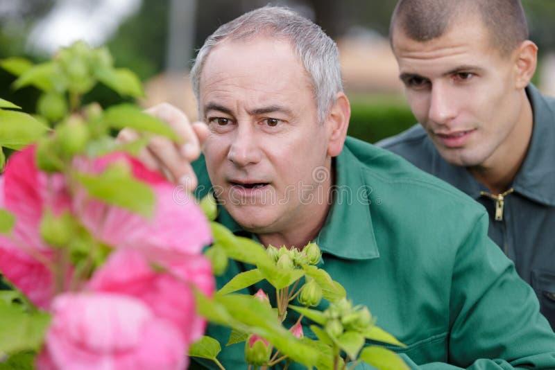 Twee tuinlieden die op grond knielen en nieuwe installaties plaatsen royalty-vrije stock fotografie