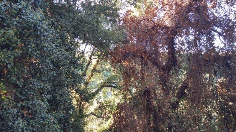 Twee verschillende omstandigheden van een boom royalty-vrije stock fotografie