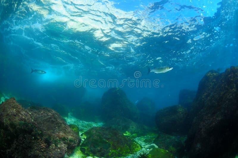 Twee vissen dichtbij oppervlakte stock afbeelding