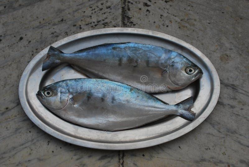 Twee vissen op een schotel royalty-vrije stock foto's